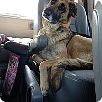Adopt A Pet :: Wednesday - Laingsburg, MI