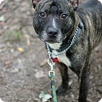 Adopt A Pet :: Hennessey - Tinton Falls, NJ