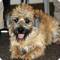 Adopt A Pet :: Junior - Santa Ana, CA