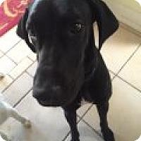 Adopt A Pet :: Frankie - Phoenix, AZ