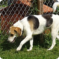 Adopt A Pet :: Dolly - Delaware, OH
