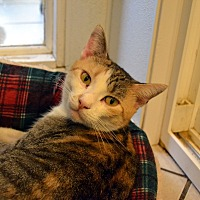 Adopt A Pet :: Ivy - Broadway, NJ
