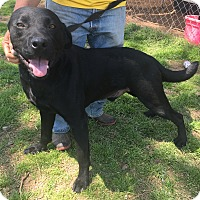 Adopt A Pet :: Rosco 2 in Ct - Manchester, CT