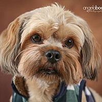Adopt A Pet :: Jake D3194 - Shakopee, MN