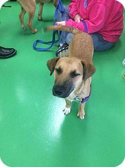 Shepherd (Unknown Type) Mix Dog for adoption in St Louis, Missouri - Cher