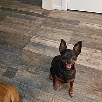 Adopt A Pet :: Pepper - Wilmington, DE