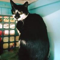 Adopt A Pet :: Tango - Camano Island, WA