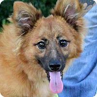Adopt A Pet :: Firecracker - Glastonbury, CT