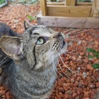Adopt A Pet :: Maria - Wellsville, NY