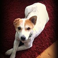 Adopt A Pet :: Bliss - Tijeras, NM