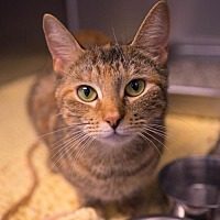 Adopt A Pet :: Angelique - Birdsboro, PA