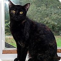 Adopt A Pet :: Copperfield needs a farm - Saint Albans, WV