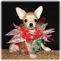 Adopt A Pet :: Scarlett - Palm City, FL