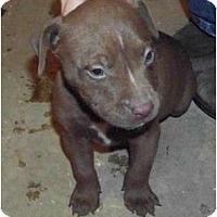 Adopt A Pet :: Zane - Claypool, IN