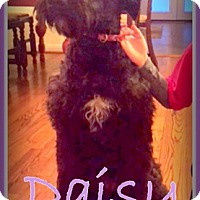 Adopt A Pet :: TX - Daisy - Houston, TX