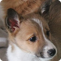 Adopt A Pet :: Bandit - North Olmsted, OH