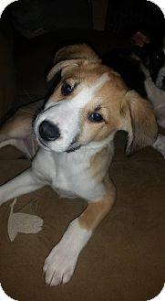 Hound (Unknown Type)/Shepherd (Unknown Type) Mix Puppy for adoption in Flushing, Michigan - Charlee