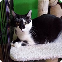 Adopt A Pet :: Mary - Fayette City, PA