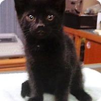 Adopt A Pet :: Jasper - Lebanon, PA