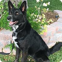 Adopt A Pet :: KODY - San Pedro, CA