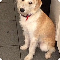 Adopt A Pet :: Deagle - Broken Arrow, OK