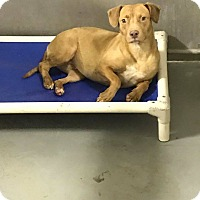 Adopt A Pet :: Kahleesi - Mechanicsburg, PA