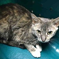 Adopt A Pet :: BLUEBELL - Canfield, OH