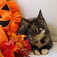 Adopt A Pet :: Heidi - Oviedo, FL