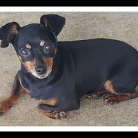 Adopt A Pet :: PETUNIA - Winchester, CA