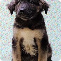 Adopt A Pet :: Nick - Waldorf, MD