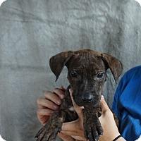 Adopt A Pet :: Jessa - Oviedo, FL