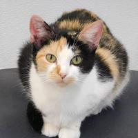 Adopt A Pet :: Mitzy - Owensboro, KY