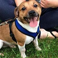 Adopt A Pet :: Jack - Doylestown, PA