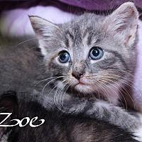 Adopt A Pet :: Zoe - Media, PA