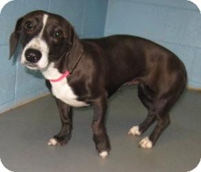 Dachshund/Terrier (Unknown Type, Small) Mix Dog for adoption in Stillwater, Oklahoma - Winnie
