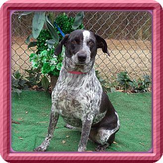 Pointer Mix Dog for adoption in Marietta, Georgia - ZEN (R)