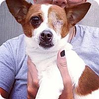 Adopt A Pet :: Daphne - Chicago, IL