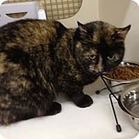 Adopt A Pet :: Ambrosia - Troy, OH