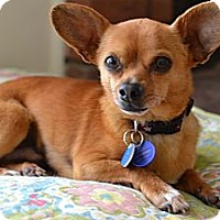 Adopt A Pet :: Luigi - Los Angeles, CA