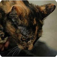 Adopt A Pet :: Kira - Warminster, PA