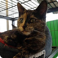 Adopt A Pet :: Delilah - Hamilton, ON