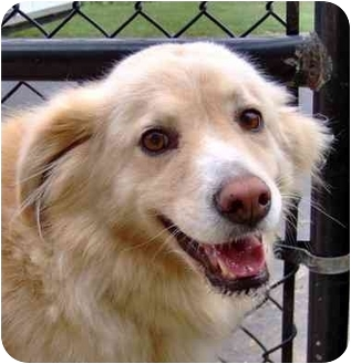 Retriever (Unknown Type) Mix Dog for adoption in Inman, South Carolina - Cleo