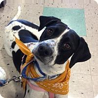 Adopt A Pet :: Rosie - Schaumburg, IL