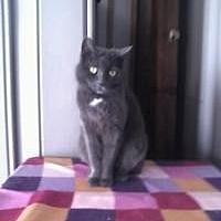 Adopt A Pet :: Dusty - Calimesa, CA