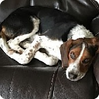 Adopt A Pet :: Lenny - Avon, NY