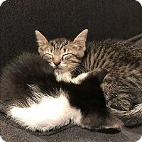 Adopt A Pet :: Luna - Brooklyn, NY