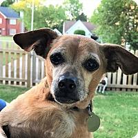 Adopt A Pet :: Jeffrey - Knoxville, TN