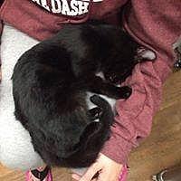 Adopt A Pet :: Luna Kitty - Lorain, OH