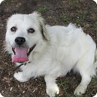Adopt A Pet :: Tyson - Rocky Mount, NC