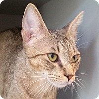 Adopt A Pet :: Harriet - Sarasota, FL